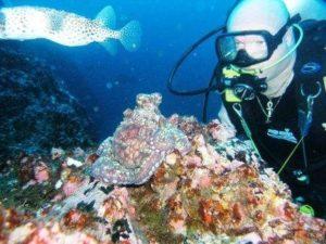 Nick diving at reef