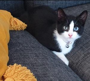 Sue Gooding's cat Maisie